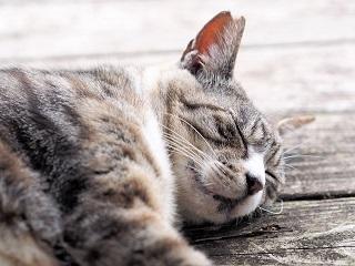 睡眠の役割と夜勤で睡眠の負債(ダメージ)がたまる理由