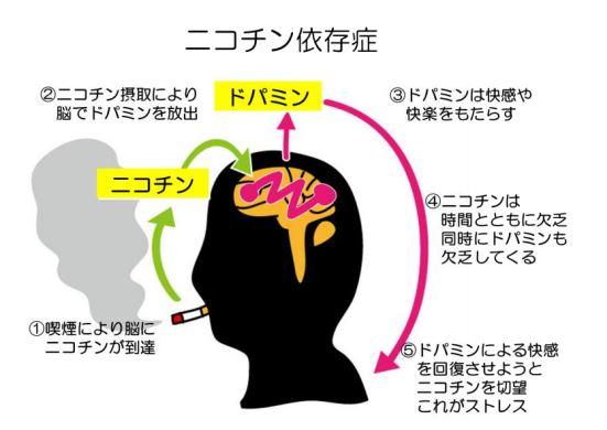 タバコのニコチン接種からっドパミン放出のサイクル